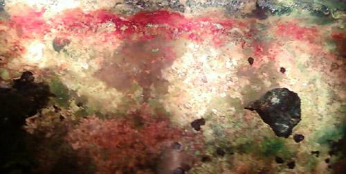 bacterialart-500.jpg