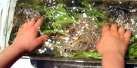 Environmental Education STEM / Energy from grass