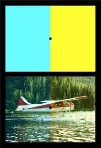 illusion-HumBeh-200px.jpg