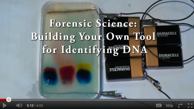 summerfellows-video-forensics.png
