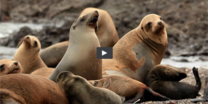 A 'Big Blue Live' Look at Marine Life
