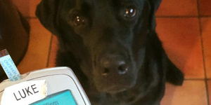 When a Dog Nose Best: Scent Science - Jedi, a diabetic alert dog after alerting to a low blood glucose event